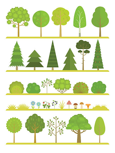 forest plants collection - куст stock illustrations