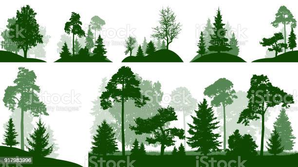 Forest set trees in the park silhouette isolated vector vector id917983996?b=1&k=6&m=917983996&s=612x612&h=wuc5exnoojdmhldvp2awincxcmnyv2iwrfrew zfo38=