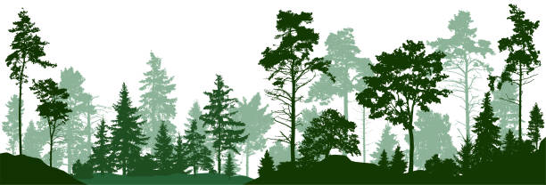 Forest silhouette trees. Evergreen coniferous forest with pines, fir trees,  christmas tree, cedar, Scotch fir. Vector illustration. (Every tree isolated, separate from each other, free-standing) Forest silhouette trees. Evergreen coniferous forest with pines, fir trees,  christmas tree, cedar, Scotch fir. Vector illustration. (Every tree isolated, separate from each other, free-standing) black white snow scene silhouette stock illustrations