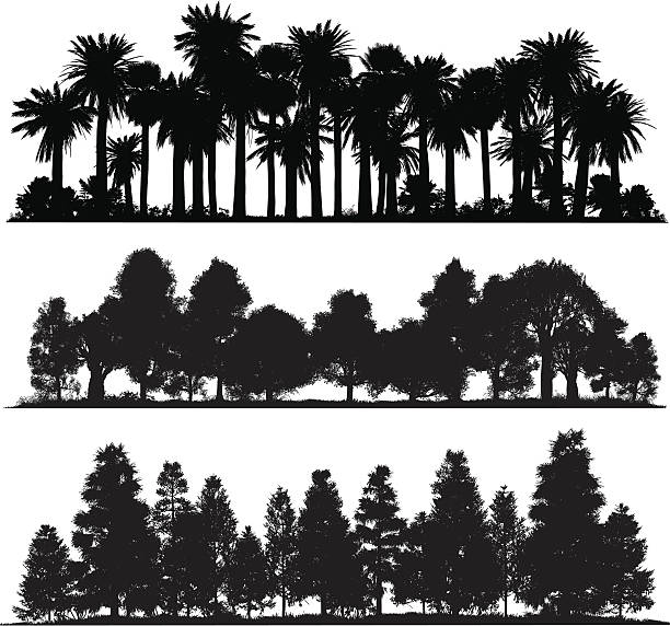 forest krojów - palm tree stock illustrations