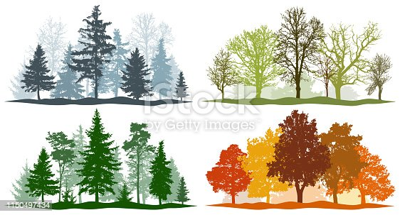 Forest trees winter spring summer autumn. 4 seasons vector illustration