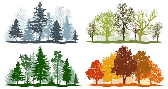 Forest trees winter spring summer autumn. 4 seasons vector illustration clipart
