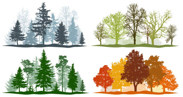 Forest trees winter spring summer autumn. 4 seasons vector illustration Forest trees winter spring summer autumn. 4 seasons vector illustration forest stock illustrations