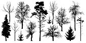 Forest trees without leaves. Winter trees set, silhouette vector. Сollection of isolated tree trunks with knots