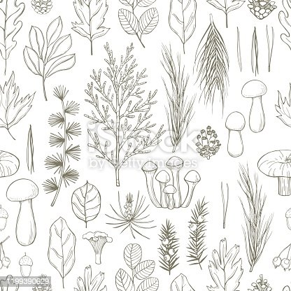 Forest vector seamless pattern with leaves, conifer branches, cones and mushrooms. Sketch  illustration.