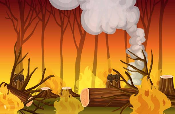 stockillustraties, clipart, cartoons en iconen met een bos wildvuur ramp - illustraties van bosbrand