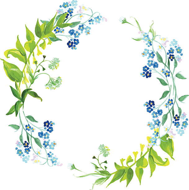 Forget-me-not and herb watercolor round vector frame​​vectorkunst illustratie