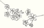 """Forget-Me-Not Blossoms in Black and White shows the blossoms.  These are also known as """"Mouse Ears"""".  They are generally blue in color."""