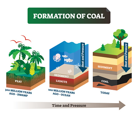 Formation of coal vector illustration. Labeled educational rock birth scheme