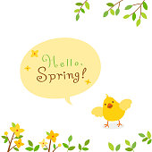 Forsythia flowers with baby chick.Spring background