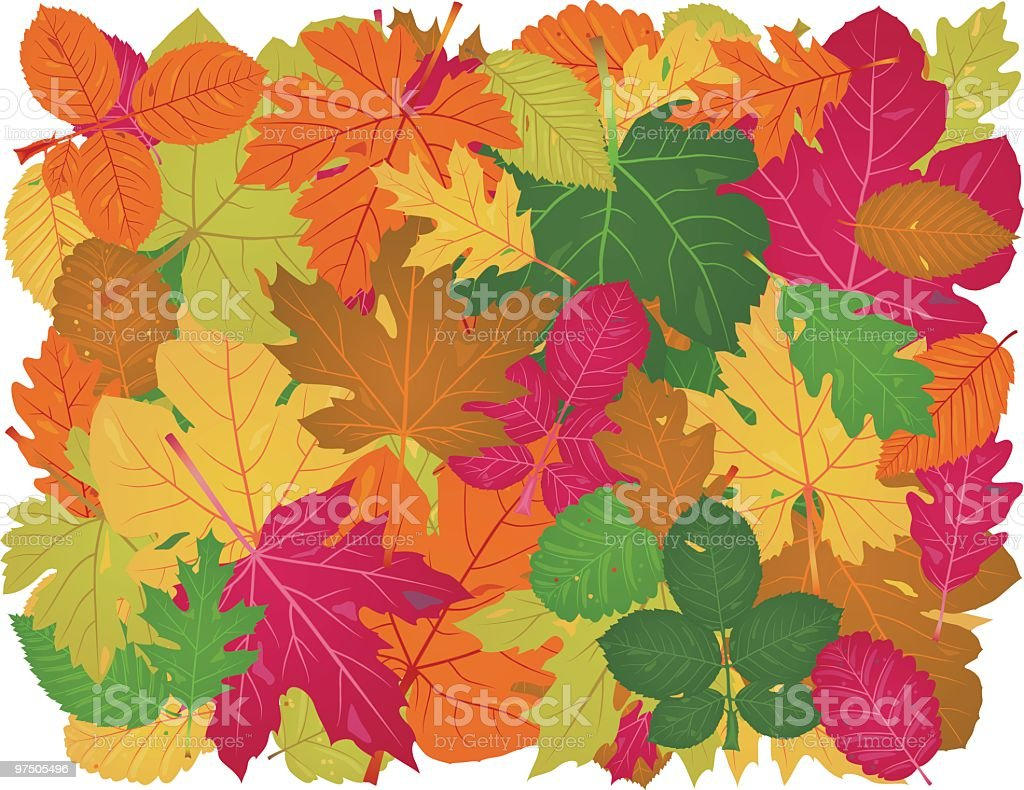 Forty-Eight Unique Leaves From Eight Trees royalty-free fortyeight unique leaves from eight trees stock vector art & more images of autumn