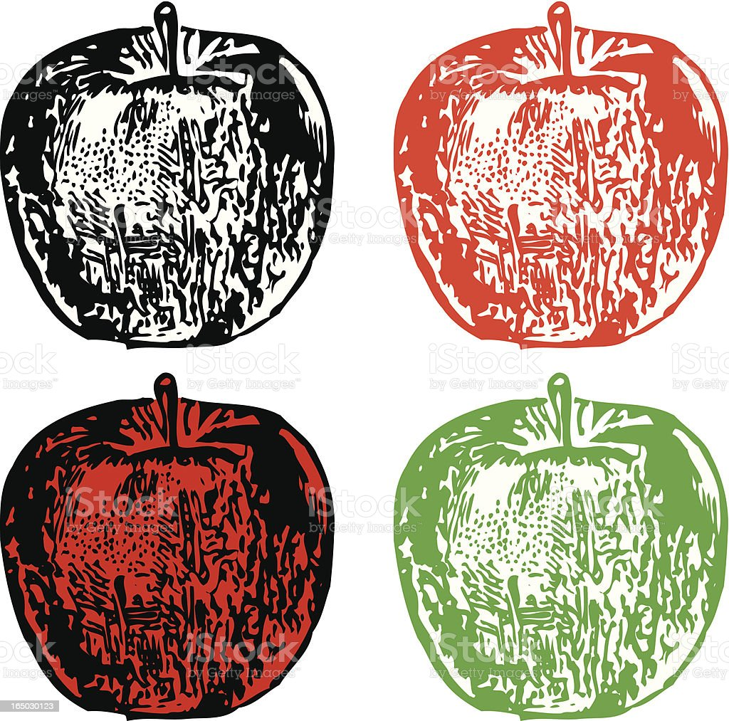 Four Apples (vector illustrations) royalty-free stock vector art