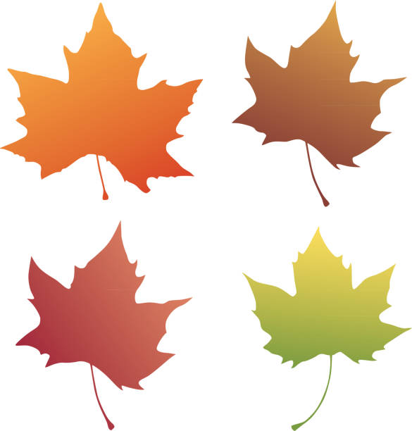 Four Autumn Leaves Vector illustration of four colorful autumn leaves. maple leaf stock illustrations