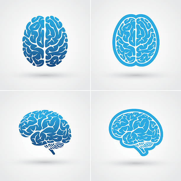 Four brain icons Set of four blue brain icons. Top and side view brain stock illustrations