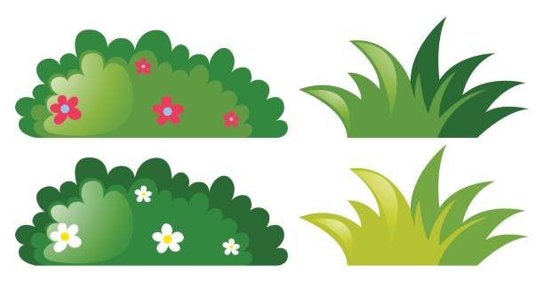 four bushes with and without flowers - куст stock illustrations