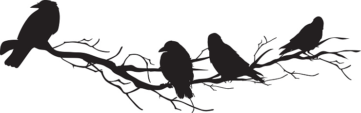 Four Crow Silhouettes Perched On A Branch Stock ...
