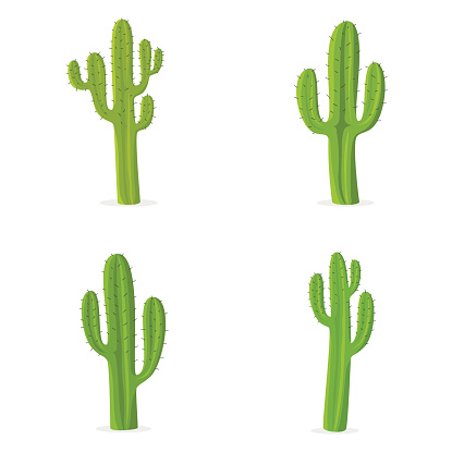 Four different cacti against white background
