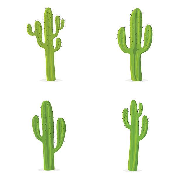 stockillustraties, clipart, cartoons en iconen met four different cacti against white background - cactus