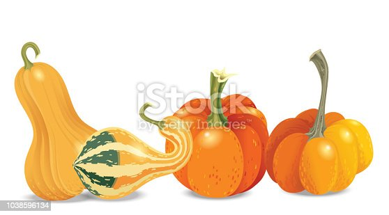 Four different orange pumpkin isolated on white background. Vector autumn collection. Garden vegetables harvest. Halloween theme