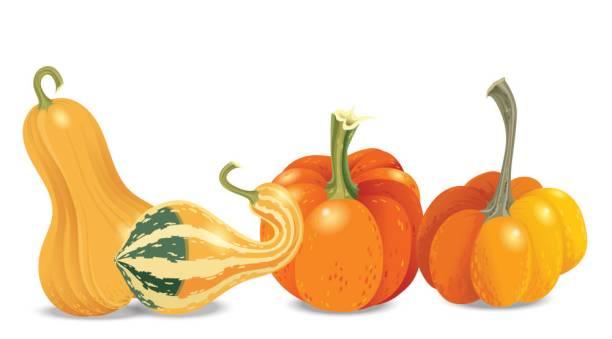 vier verschiedene orange kürbis isoliert auf weißem hintergrund. vektor-herbst-kollektion. garten gemüse zu ernten. halloween-thema. - flaschenkürbis stock-grafiken, -clipart, -cartoons und -symbole