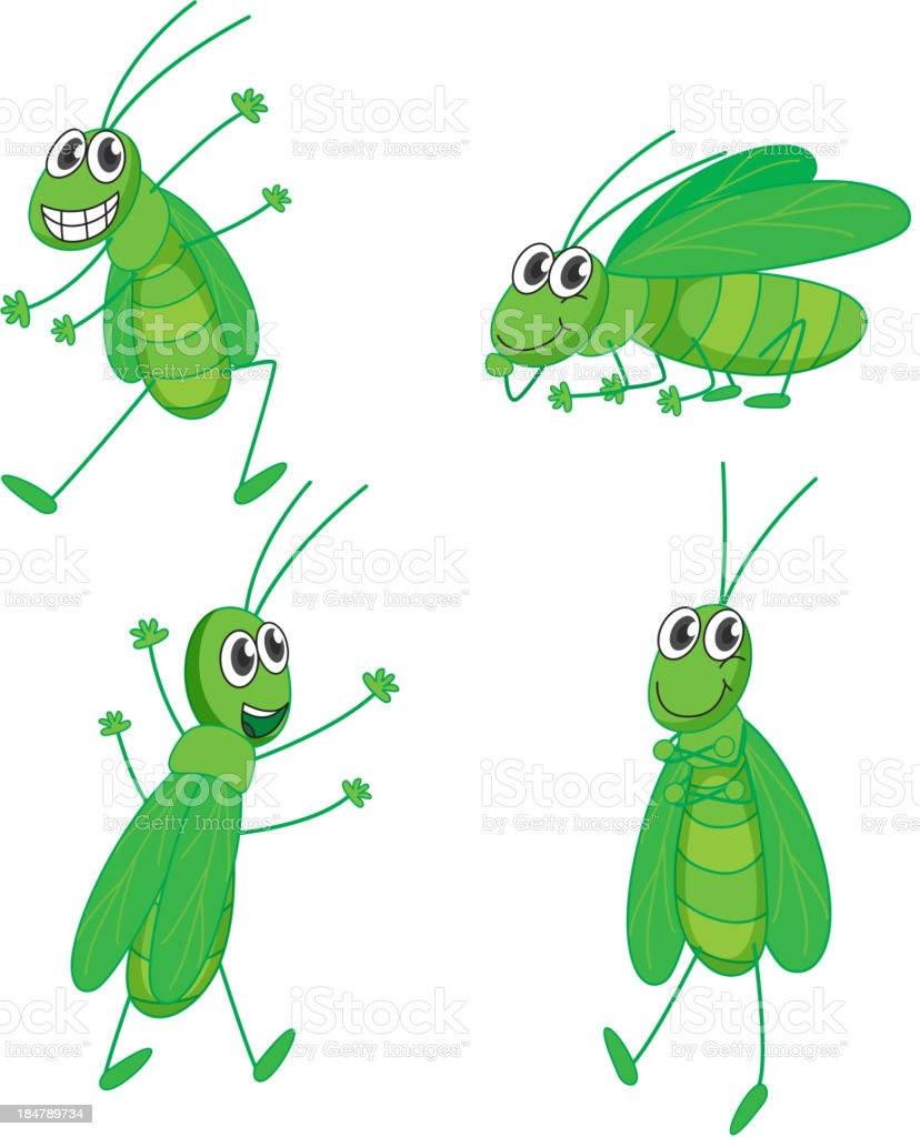 Four grasshoppers royalty-free four grasshoppers stock vector art & more images of animal