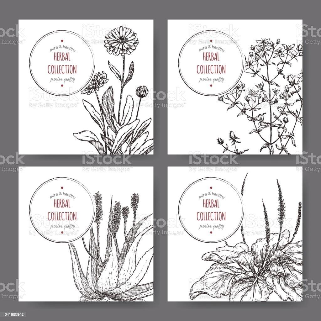 Quatre étiquettes de calendula aux herbes, Saint John millepertuis, aloès, Plantago - Illustration vectorielle