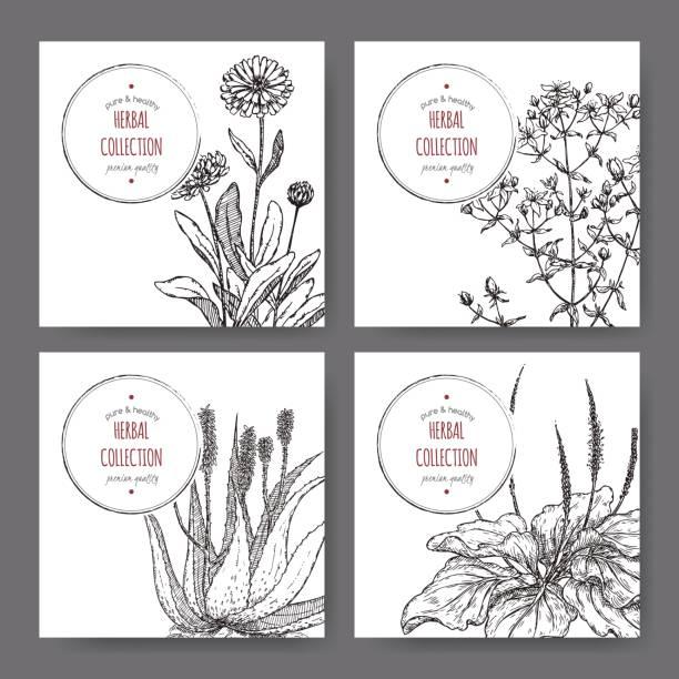 four herbal labels with calendula, saint john wort, aloe, plantago vector art illustration