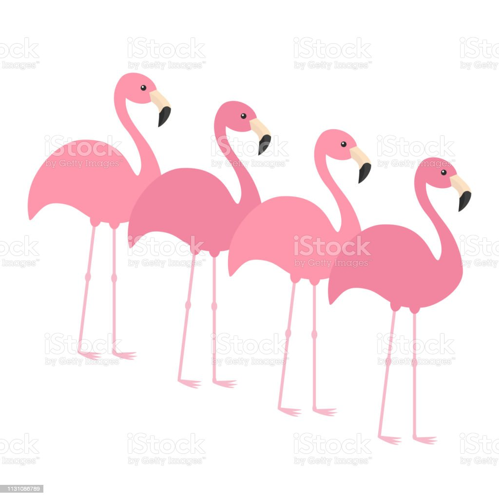 Four pink flamingo set. Exotic tropical bird. Zoo animal collection....