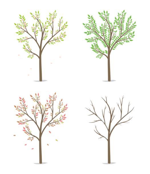 four season tree - four seasons stock illustrations