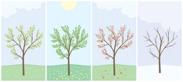 four season - four seasons stock illustrations