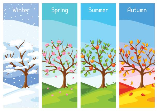 four seasons. illustration of tree and landscape in winter, spring, summer, autumn - cztery pory roku stock illustrations