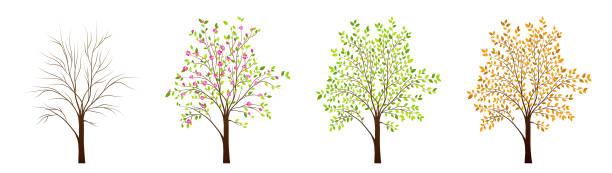 stockillustraties, clipart, cartoons en iconen met vier seizoenen van boom vector - bloesem