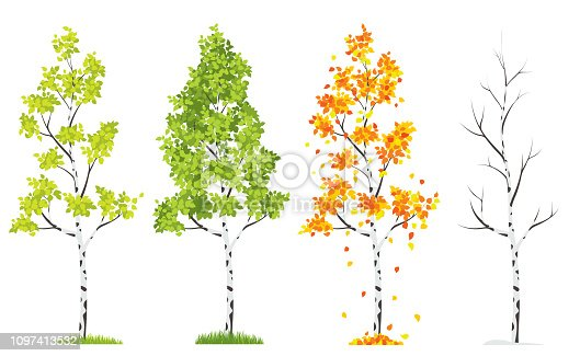 Vector Four Seasons Tree