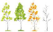 Vector Four Seasons Tree