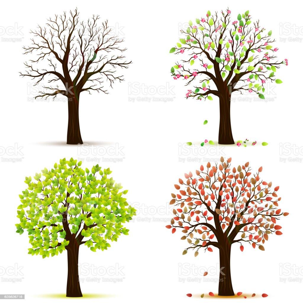 Four seasons trees vector vector art illustration