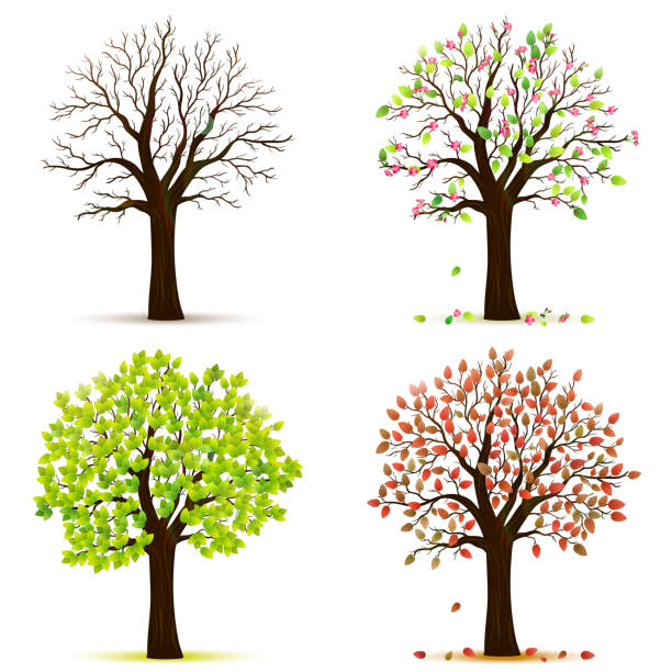 four seasons trees vector - cztery pory roku stock illustrations