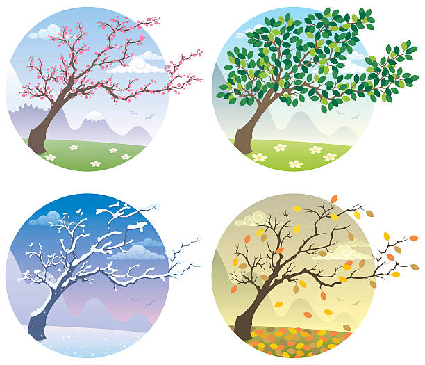 포시즌 - four seasons stock illustrations