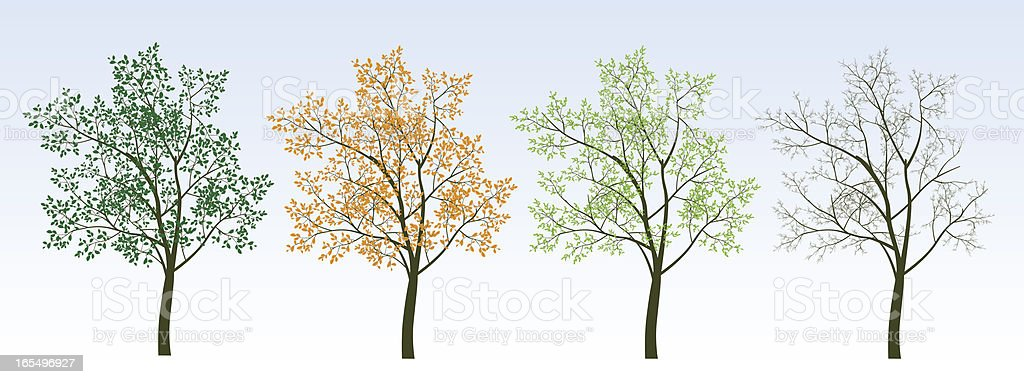 Four Trees royalty-free four trees stock vector art & more images of autumn