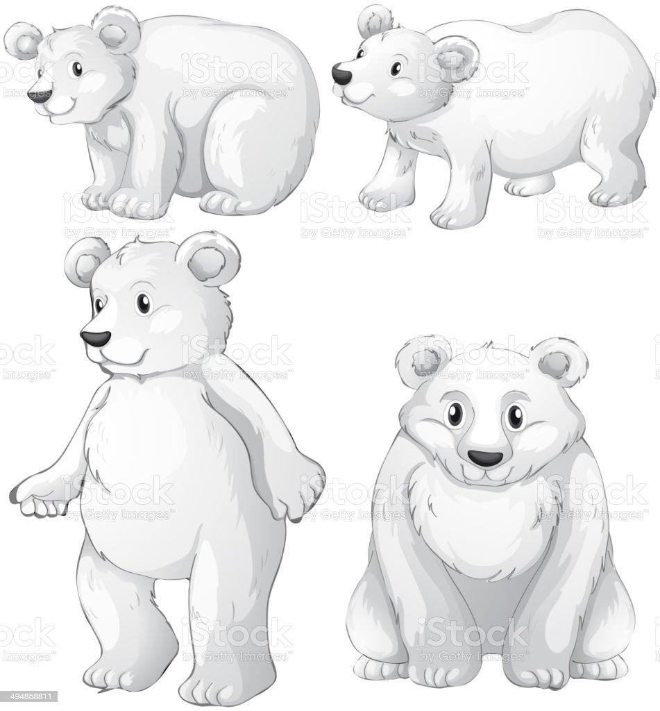 Four white polar bears