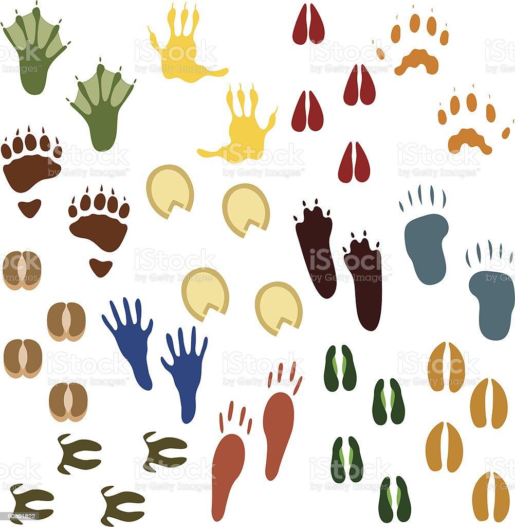 Fourteen Sets of Animal Tracks royalty-free stock vector art