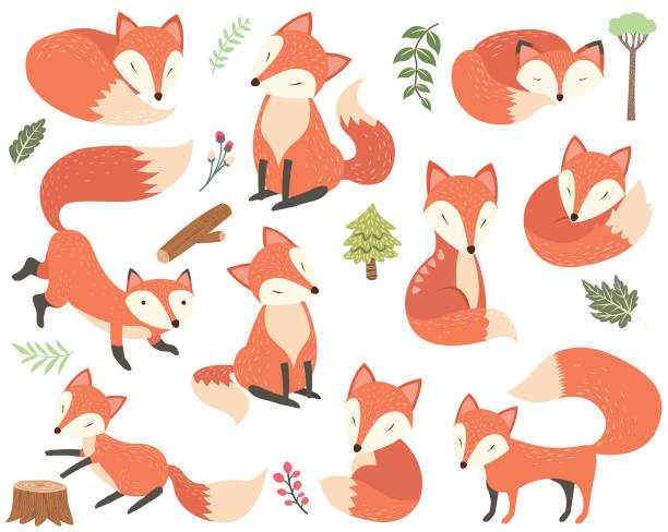 fox elements - fuchs stock-grafiken, -clipart, -cartoons und -symbole