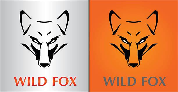 Fox. Fox Head. Vector image of an fox face design on various background animal eye stock illustrations