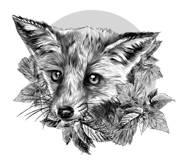 Fox head surrounded by foliage with circle in the background – artystyczna grafika wektorowa