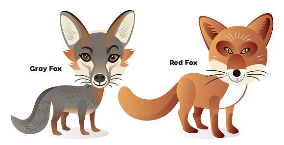 Fox, Hokkaido Red Fox, Gray Fox