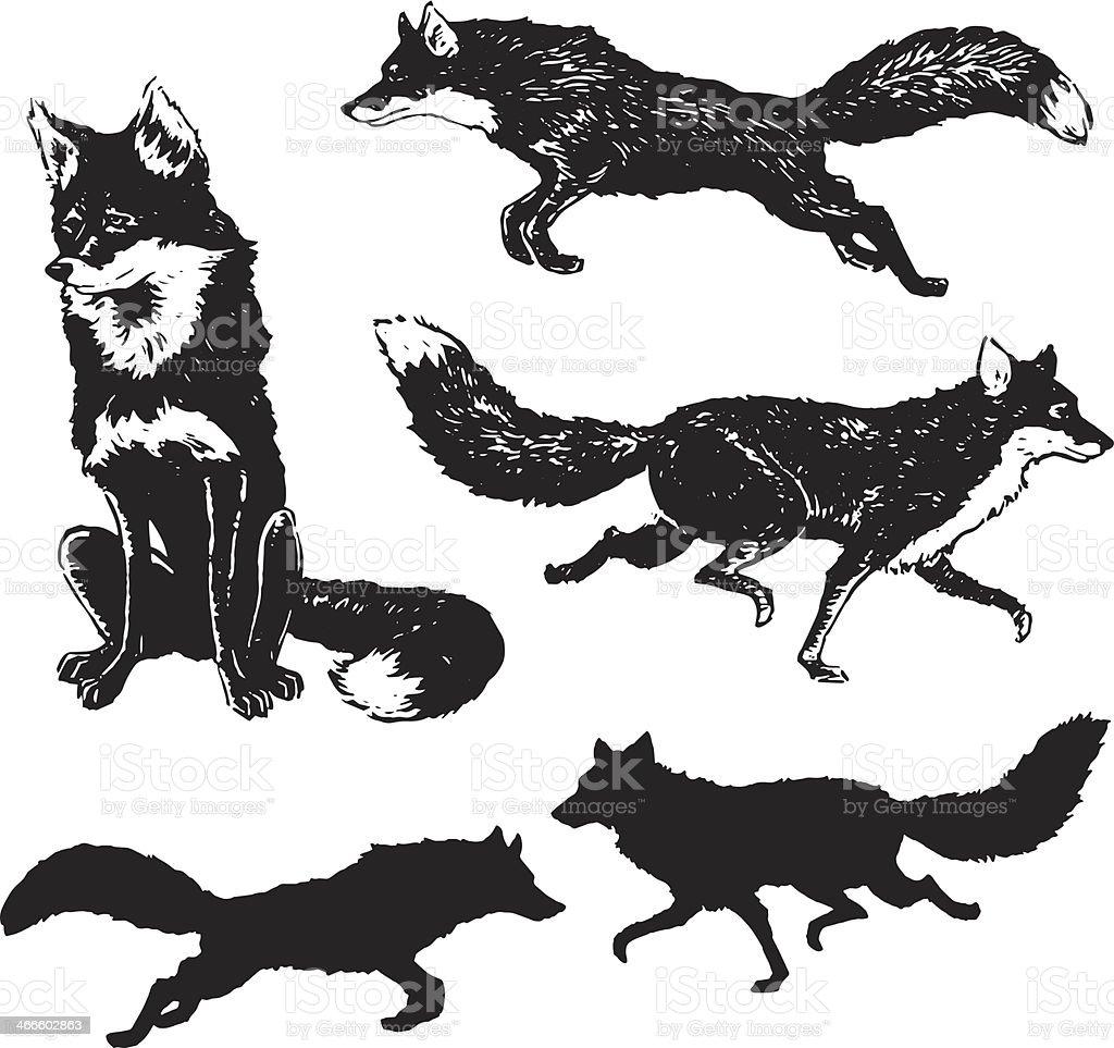 Fox medio - ilustración de arte vectorial