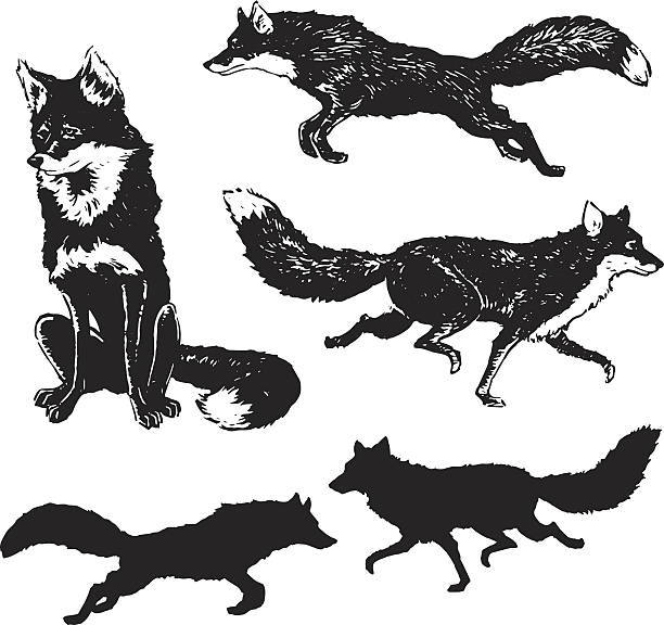 fox-illustrationen - fuchs stock-grafiken, -clipart, -cartoons und -symbole