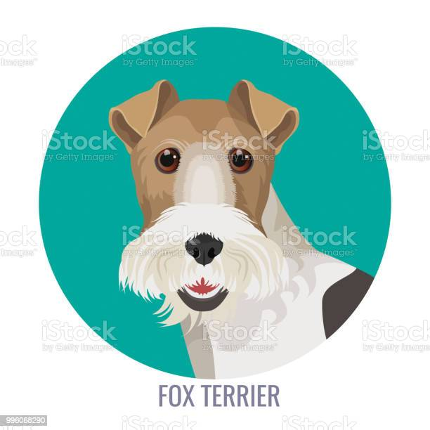 Fox terrier in color circle colorful vector illustration vector id996068290?b=1&k=6&m=996068290&s=612x612&h=db 2s5ycxcikofuje6wy4olmuzme jtkrycml3wvie8=