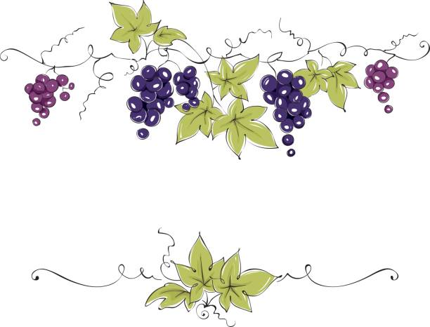 frame from grapes - vine stock illustrations, clip art, cartoons, & icons
