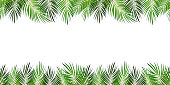 Frame from Palm Leaf with White Background. Vector Illustration