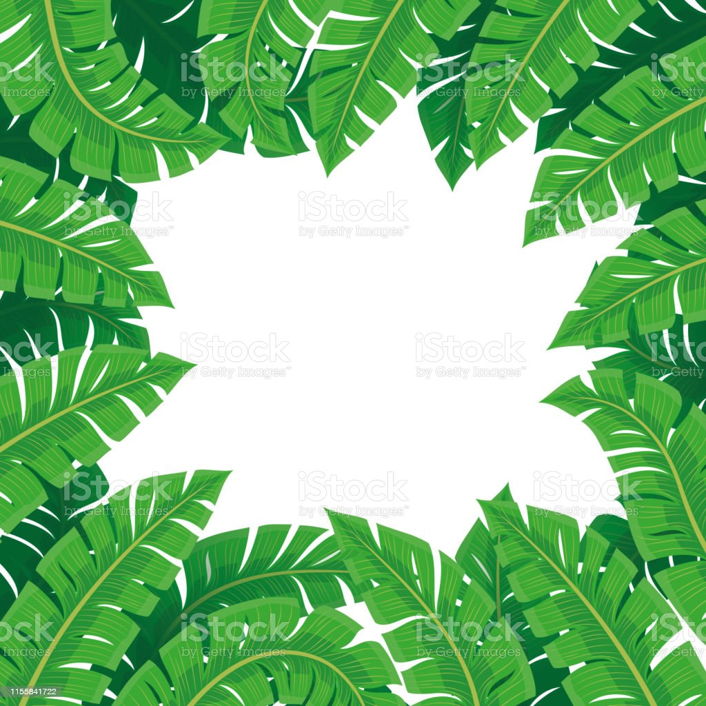 Frame Of Tropical Leaves Stock Illustration Download Image Now Istock This tropcial leaves vector frame would be perfect for any nature project. https www istockphoto com vector frame of tropical leaves gm1155841722 314812929